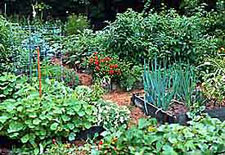 Garden Designes on All About Gardening And Nature  Vegetable Garden Design