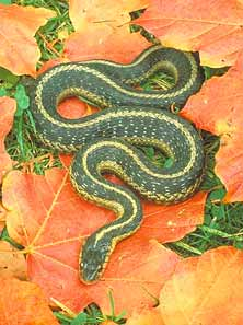 Poisonous Snakes in Wyoming http://www.garden.org/pestlibrary/animals.php?q=show&id=1800
