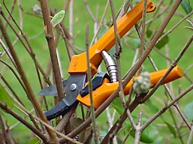 Garden Efficiently with the Right Tools