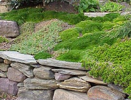 A cushion of deep green moss creates a tranquil mood.