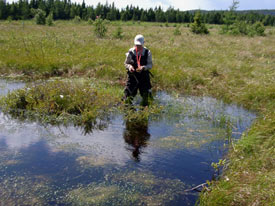 Ponds in this restored bog are essential to the development of peat. (Photo courtesy of Canadian Sphagnum Peat Moss Association)